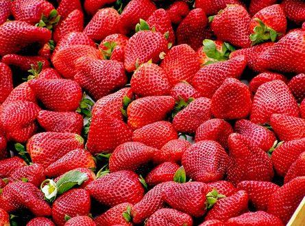 Erdbeeren 445x330 - Die Erdbeere – von Natur aus eine Delikatesse