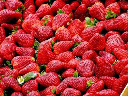 Erdbeeren - Erdbeeren