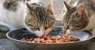 Gesundes Katzenfutter – die Basis für ein langes Katzenleben